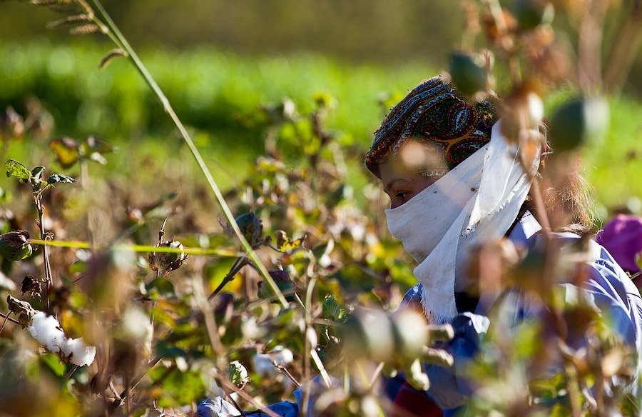 11 - La esclavitud infantil en la industria del algodón en Uzbekistán