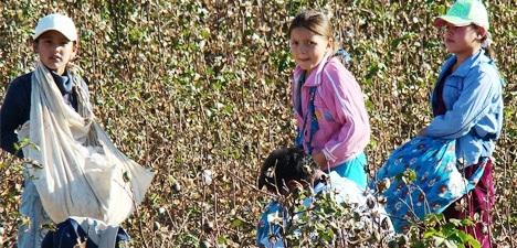 Mientras los niños de muchas partes del mundo inician la escuela, en Uzbekistán son obligados a recoger algodón