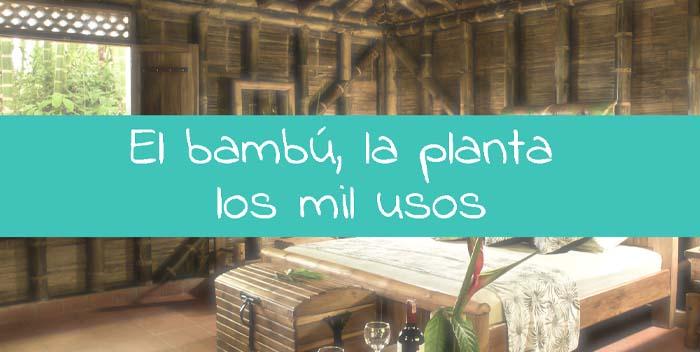 El Bambú, La Planta De Los Mil Usos