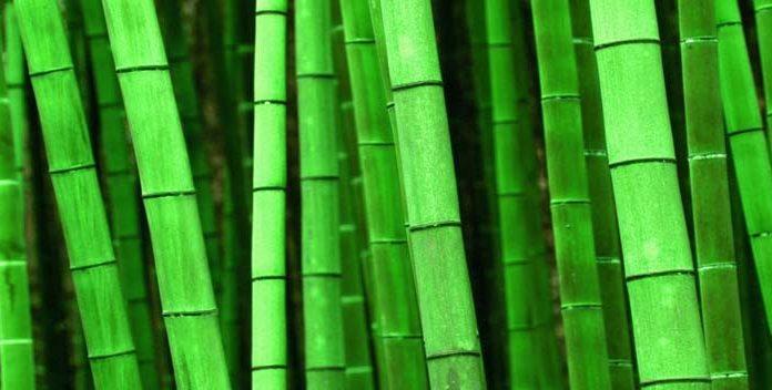 Cuáles Son Las Ventajas De Los Tejidos De Bambú - Le petit BAOBAB