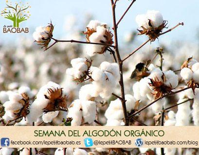 algodón orgánico, Semana del algodón orgánico, todo lo relacionado con este cultivo, Le petit BAOBAB - BLOG
