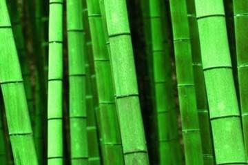 Ventajas Tejidos De Bambú